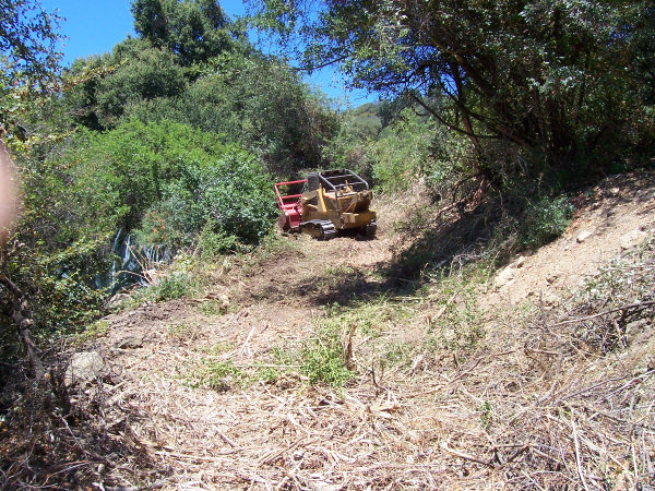 Overgrown Road - After