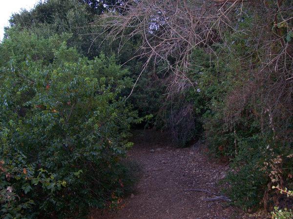Overgrown Road - Before