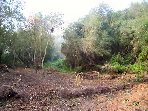 Avocado Orchard - Before