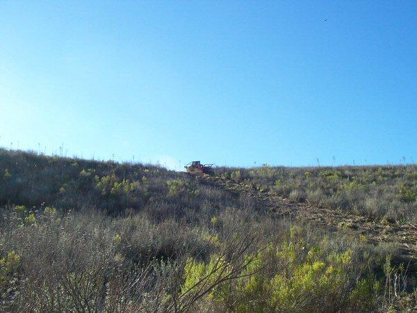 Hillside Brush - Before